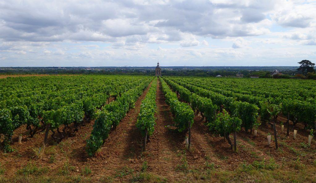 étude parcellaire vigneron
