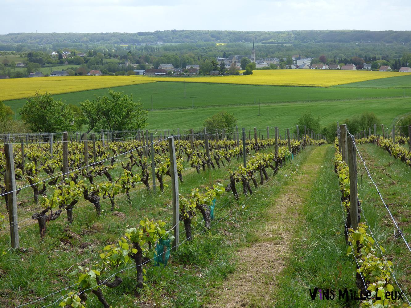 vignoble dans la Sarthe 72