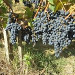 communication conversion bio vin viticulture