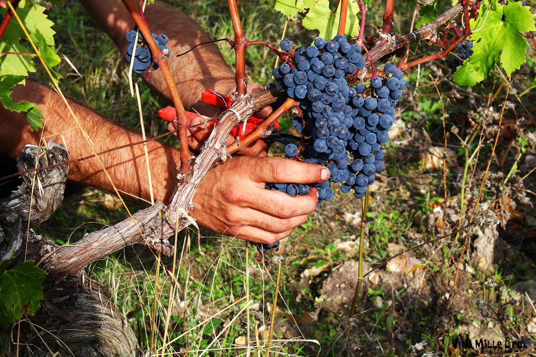 communication vigneron domaine viticole