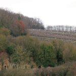 Sous les bois Dauvers dans la Sarthe