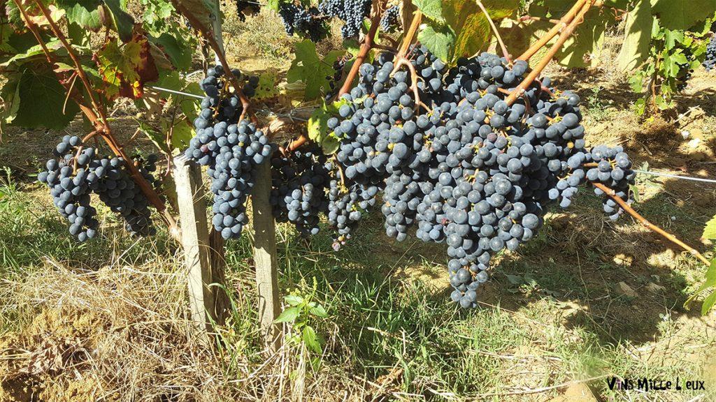 communication conversion bio vin viticulture