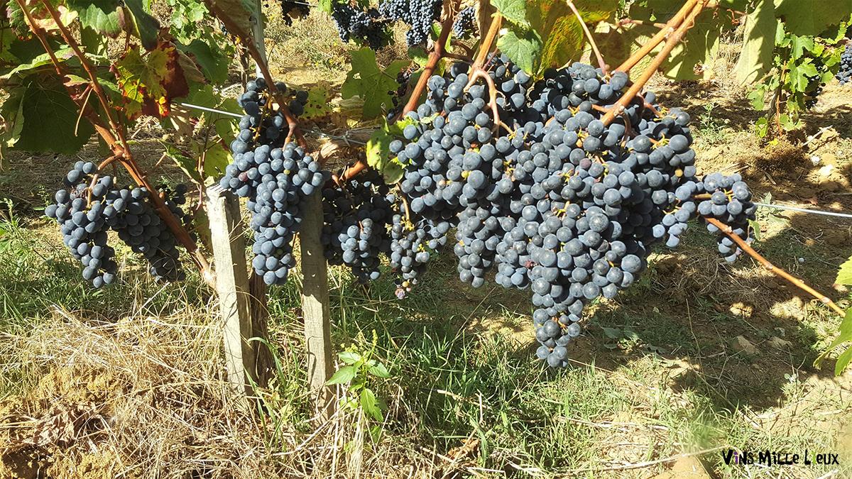 Conversion à la viticulture bio : réussir sa communication