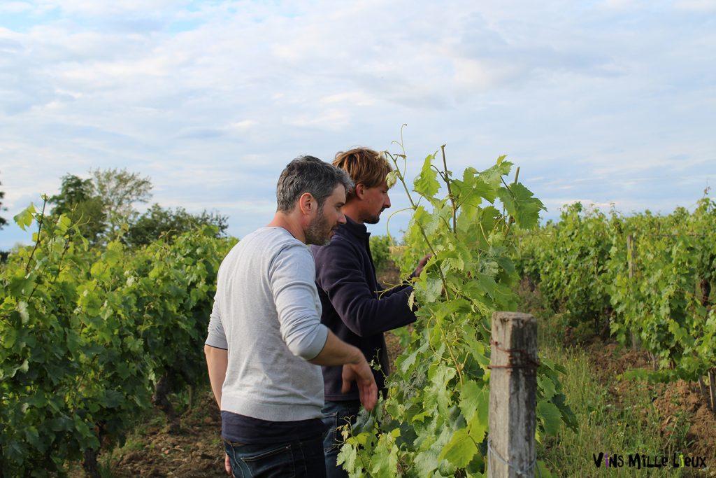 visite œnologique balade vignes dégustation