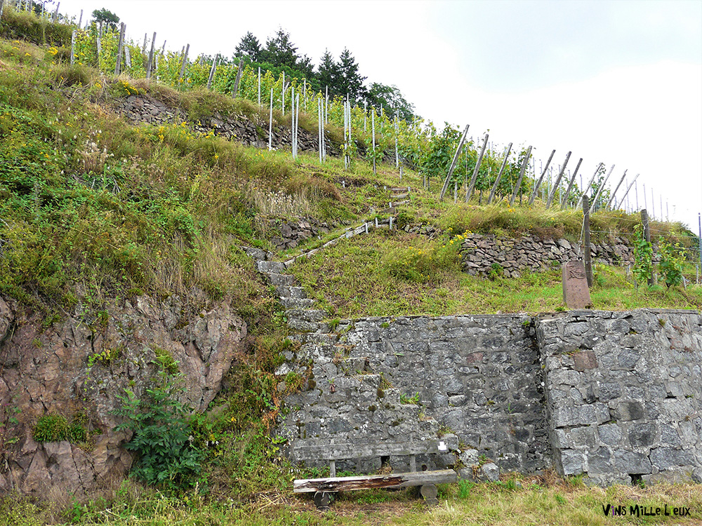 escaliers dans le vignoble alsacien